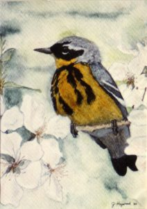 """Joyce Heywood, """"Magnolia Warbler"""""""